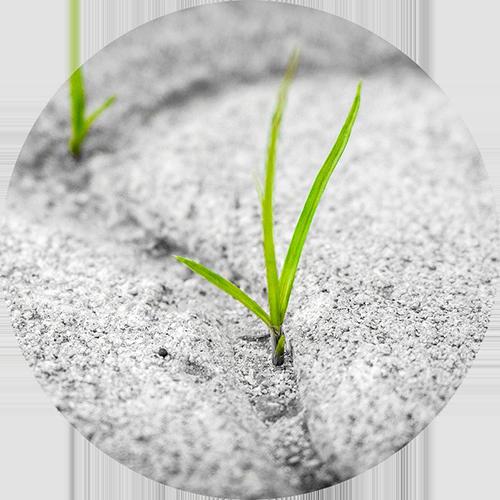 seed flexibility Liloweb